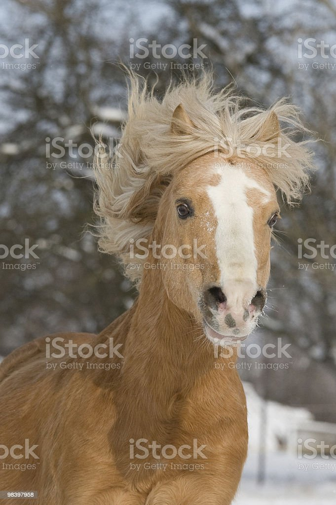 Head of running horse royalty-free stock photo