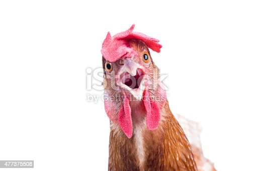 head of surprising hen
