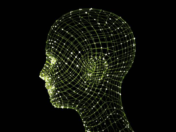 head of the person from a 3d grid. - wire frame model stock photos and pictures