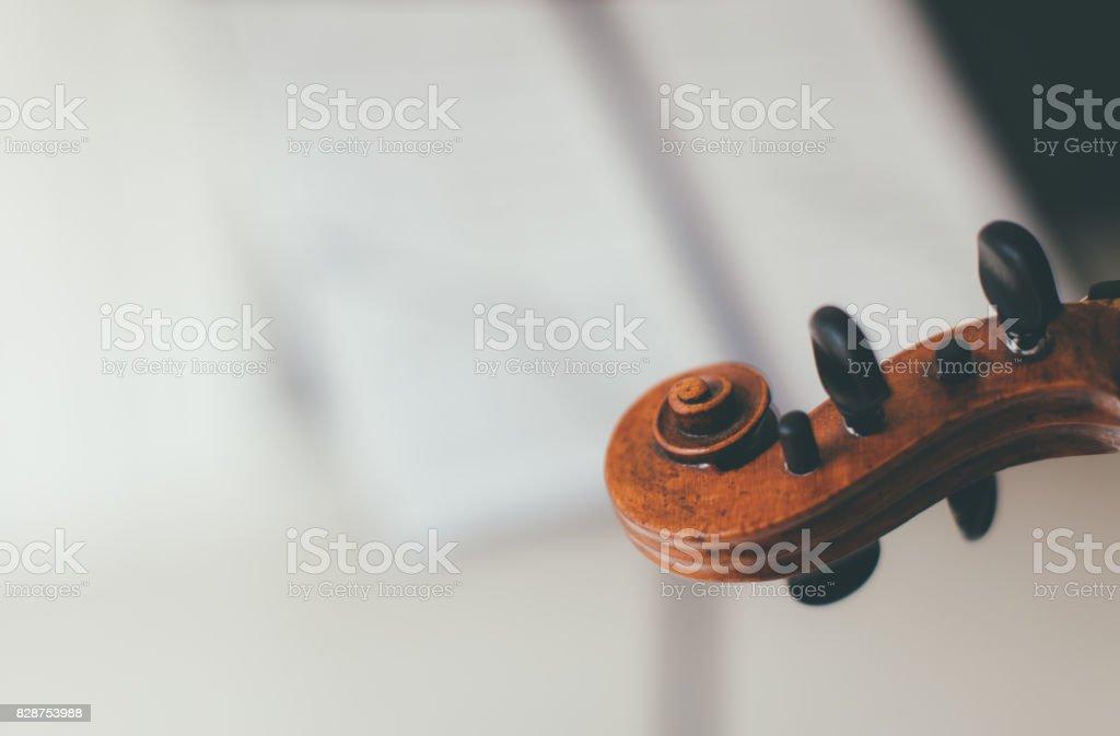 Head of Violon stock photo