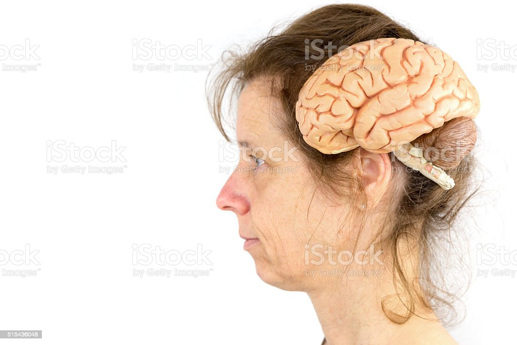 Head of woman with model of human brains stock photo
