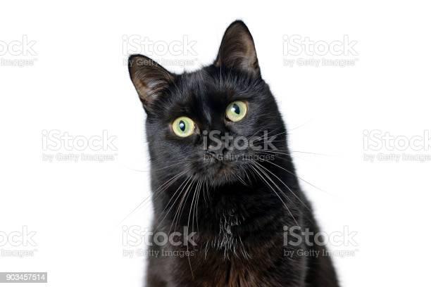 Head of young black cat isolated on white picture id903457514?b=1&k=6&m=903457514&s=612x612&h=8g1u5mgosvbonlto8kr1hthxzvf9rrobtnrzcbrv3lw=