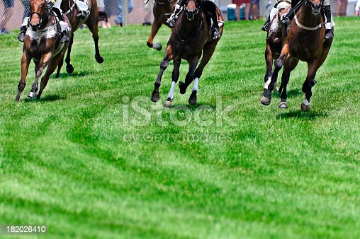 Head On shot of horse coming into a turn during a steeplechase race on turf