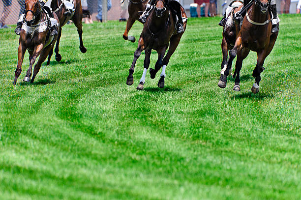 head on horse racing on turf as they round a corner - horse racing stok fotoğraflar ve resimler