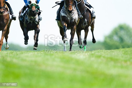 Head On shot of hot and sweaty horses coming down the home stretch to the finish line during a steeplechase race on turf