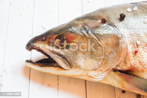 istock Head raw humpback fish with spices on a light table. 1129824366