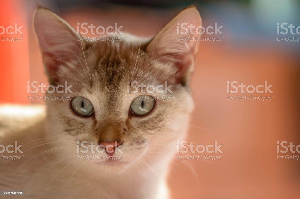 Tiro de cabeza de gatita mujeres comun - foto de stock