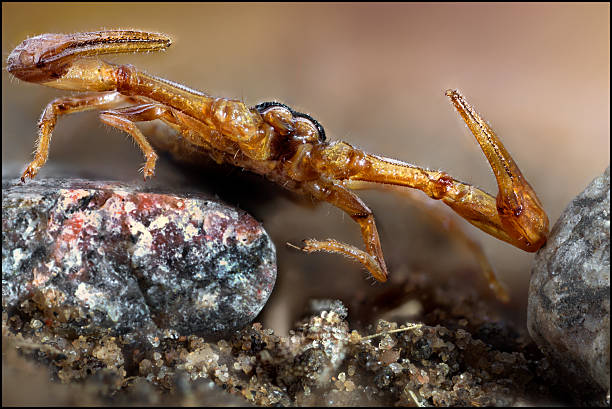 head to head portrait of a scorpion - scorpion stock photos and pictures