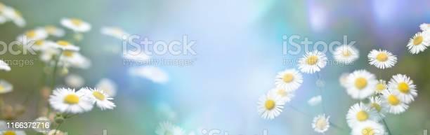 Header banner chamomile flowers field wide background in sun light picture id1166372716?b=1&k=6&m=1166372716&s=612x612&h=rxdutg0sgugmvt4nr onitsoa dqp2ne0doo4dzw4va=
