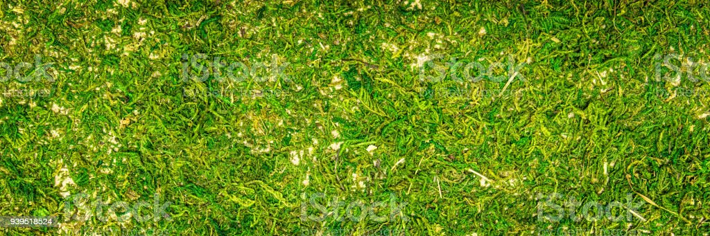Header, topview of a moss ground background, green forest floor stock photo