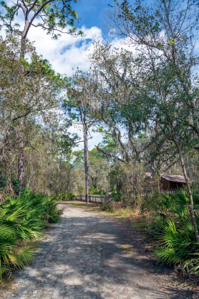 im frühling führt die straße hinunter an die alte florida - palmwedel stock-fotos und bilder
