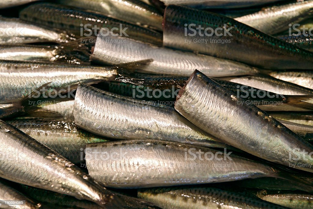 Headless mackerels royalty-free stock photo