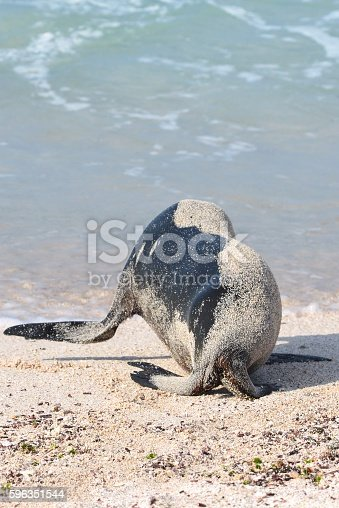 Headless Sea Lion Stock Photo & More Pictures of Animal