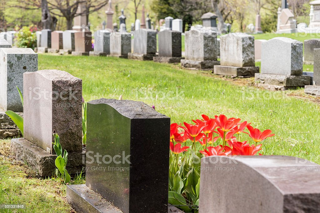Headstones in a cemetary with many red tulips stock photo