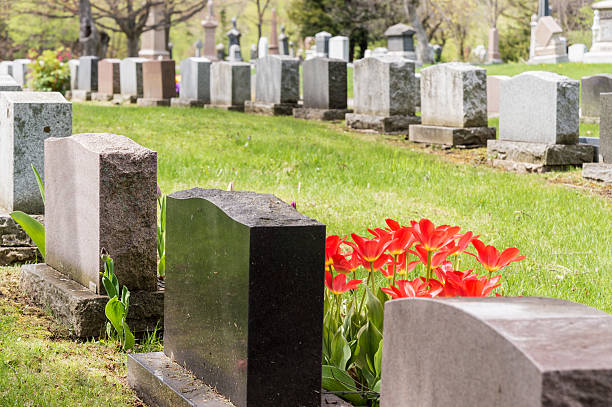 headstones in a cemetary with many red tulips - kerkhof stockfoto's en -beelden