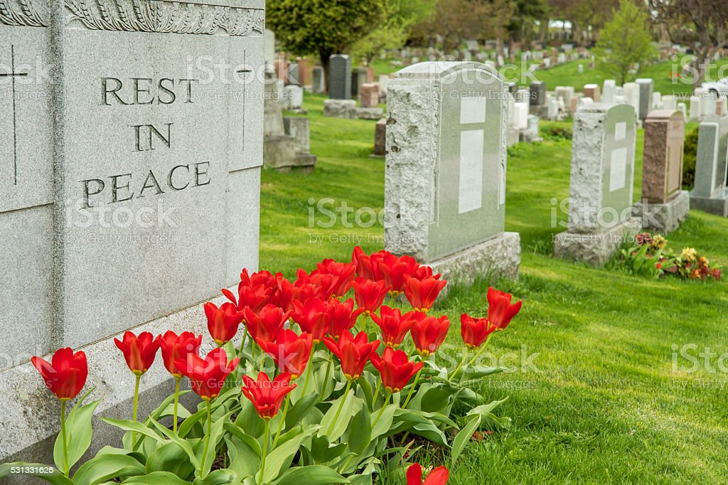 Headstones in a cemetary with red tulips stock photo
