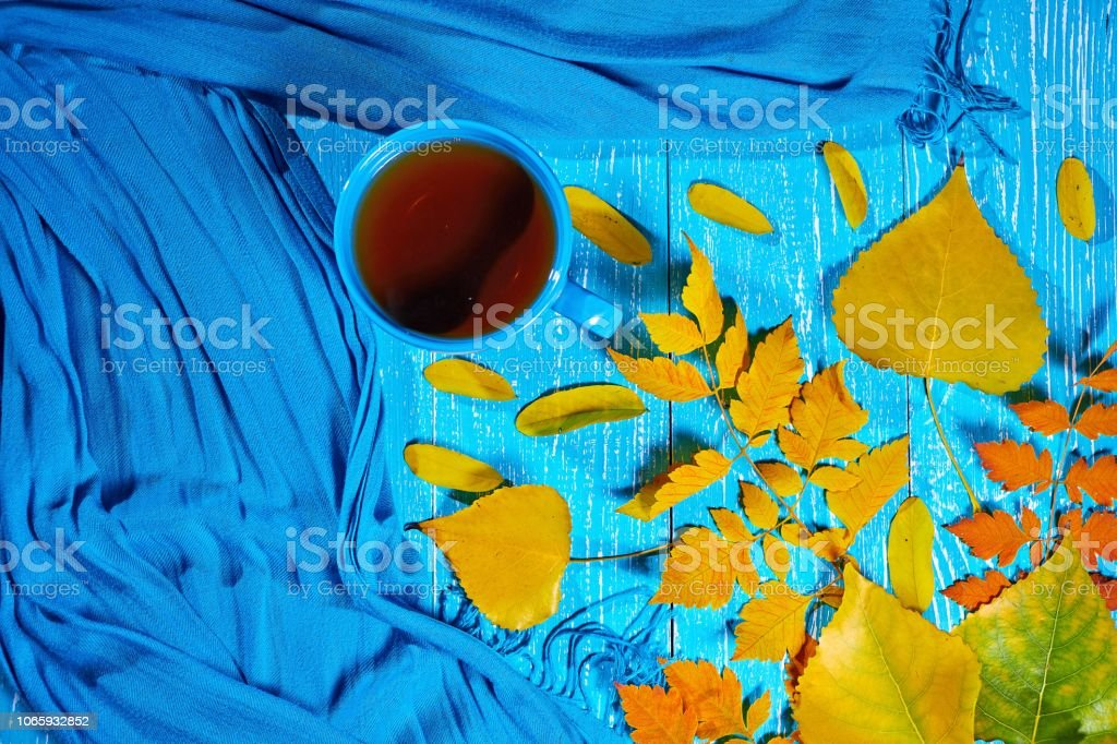 Healing cup of tea in a scarf on blue wooden background wiyh autumn leaf stock photo