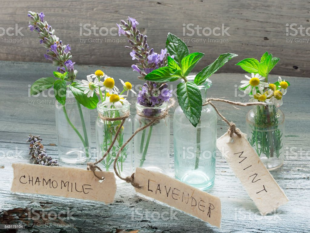 Healing herbs stock photo