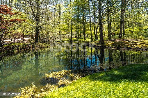Stock photo of a lake with a lot of green trees in the forest in a sunny day