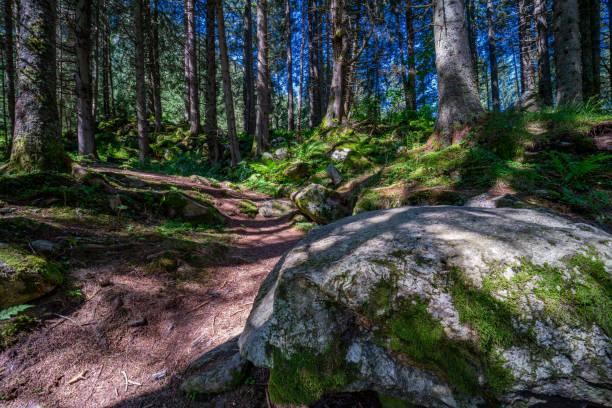 healing through forest bathing (shinrin-yoku) - forest bathing foto e immagini stock
