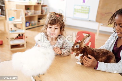 Kids in daycare taking care of chicken