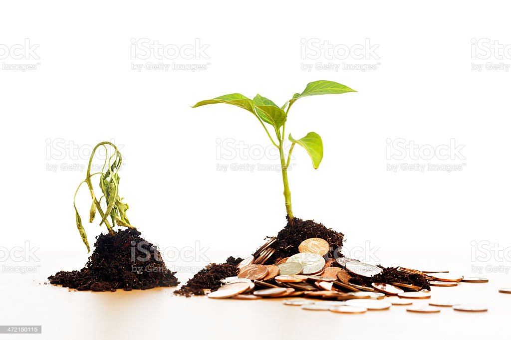 Health costs money! Flourishing seedling with coins, dying one without royalty-free stock photo