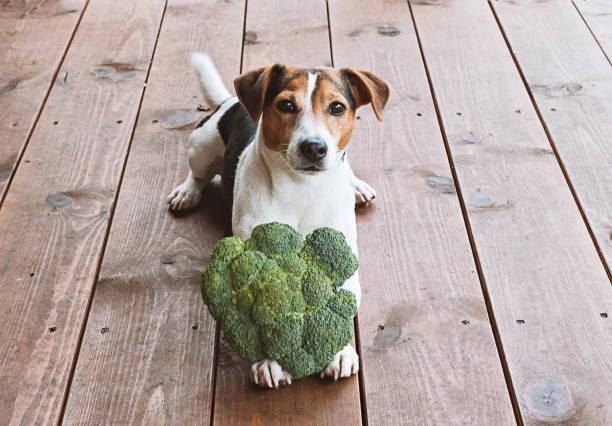 Health food for pet concept picture id938830934?b=1&k=6&m=938830934&s=612x612&w=0&h=zxi9qs91c62u7cvhf rgsfiuwe zsixxfymrhcrzkus=