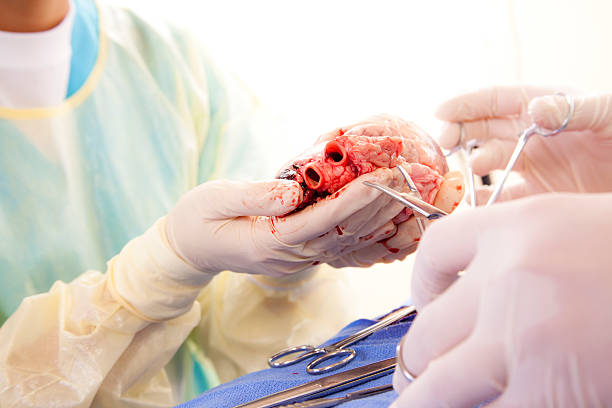 healthcare: medical students learn heart surgery procedure. - heart internal organ stock photos and pictures