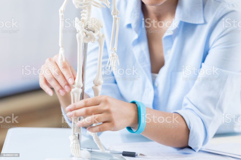 Healthcare professional examines skeletal system model stock photo