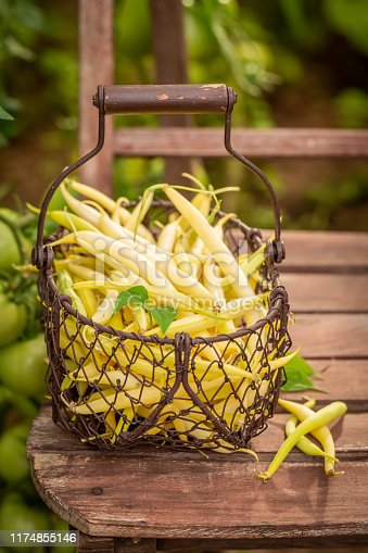 Healthy and fresh yellow beans in an old wire basket