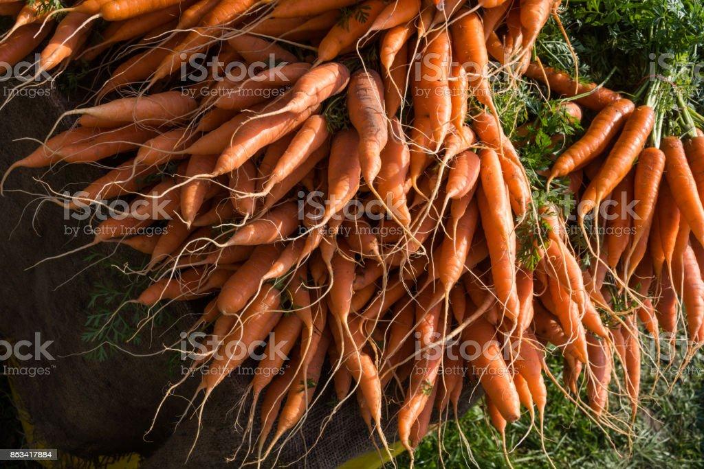 Gesund und rote Karotte auf einem Markt – Foto