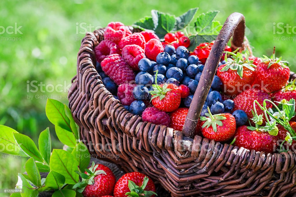 Healthy berries in sunny day stock photo