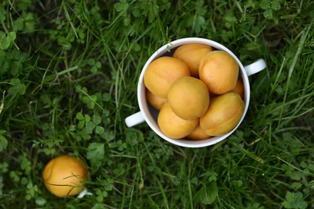 sağlıklı kahvaltı - yeşil çim arka plan üzerinde kopya alanı ile kapdikey fotoğraf kase kayısı - salud stok fotoğraflar ve resimler