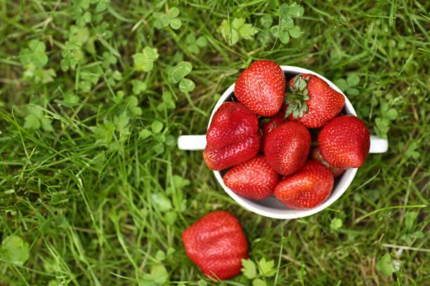 sağlıklı kahvaltı - yeşil çim arka plan üzerinde kase yakın fotoğraf çilek - salud stok fotoğraflar ve resimler