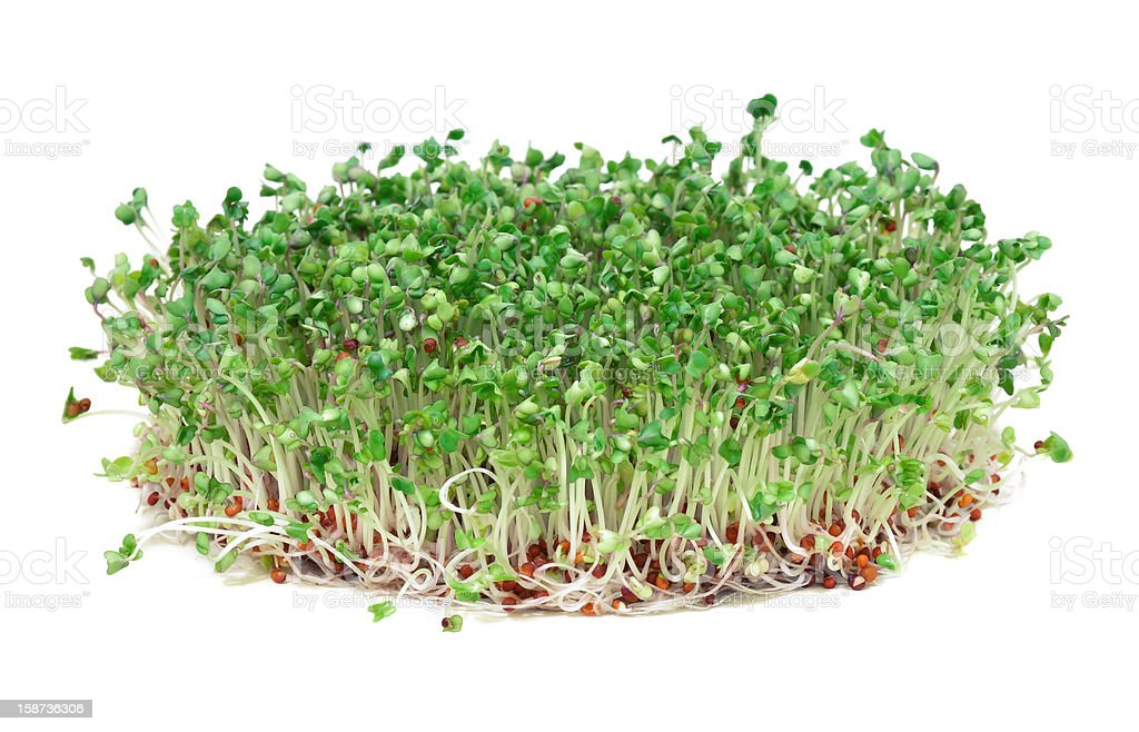 Healthy broccoli sprouts stock photo