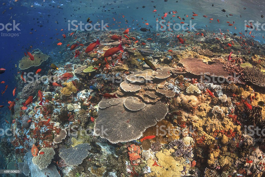 Healthy coral reef of the current city,Komodo stock photo