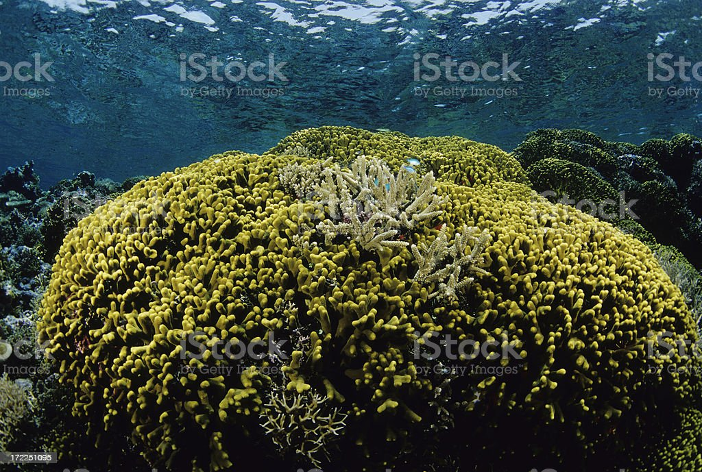 Healthy Coral Reef stock photo