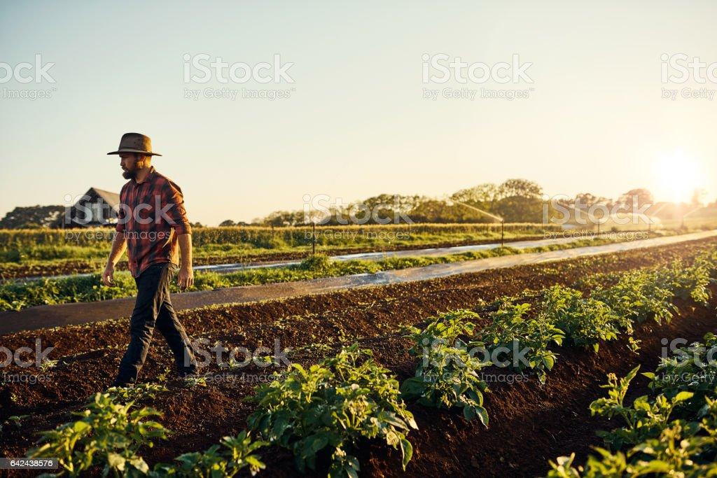 Healthy crops are a farmer's reward stock photo
