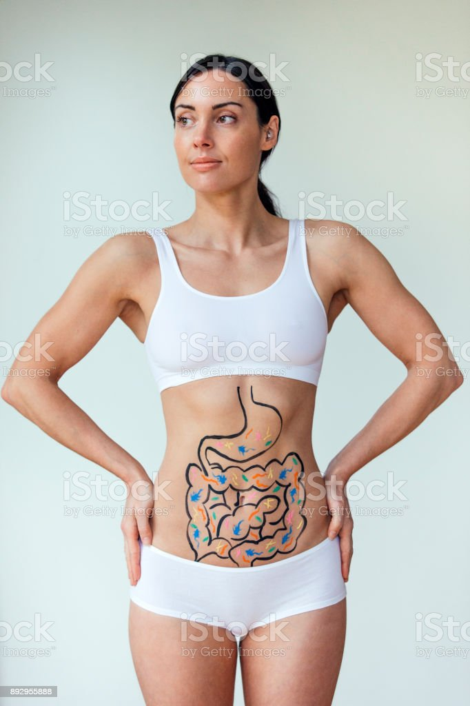 Healthy Digestive Track stock photo