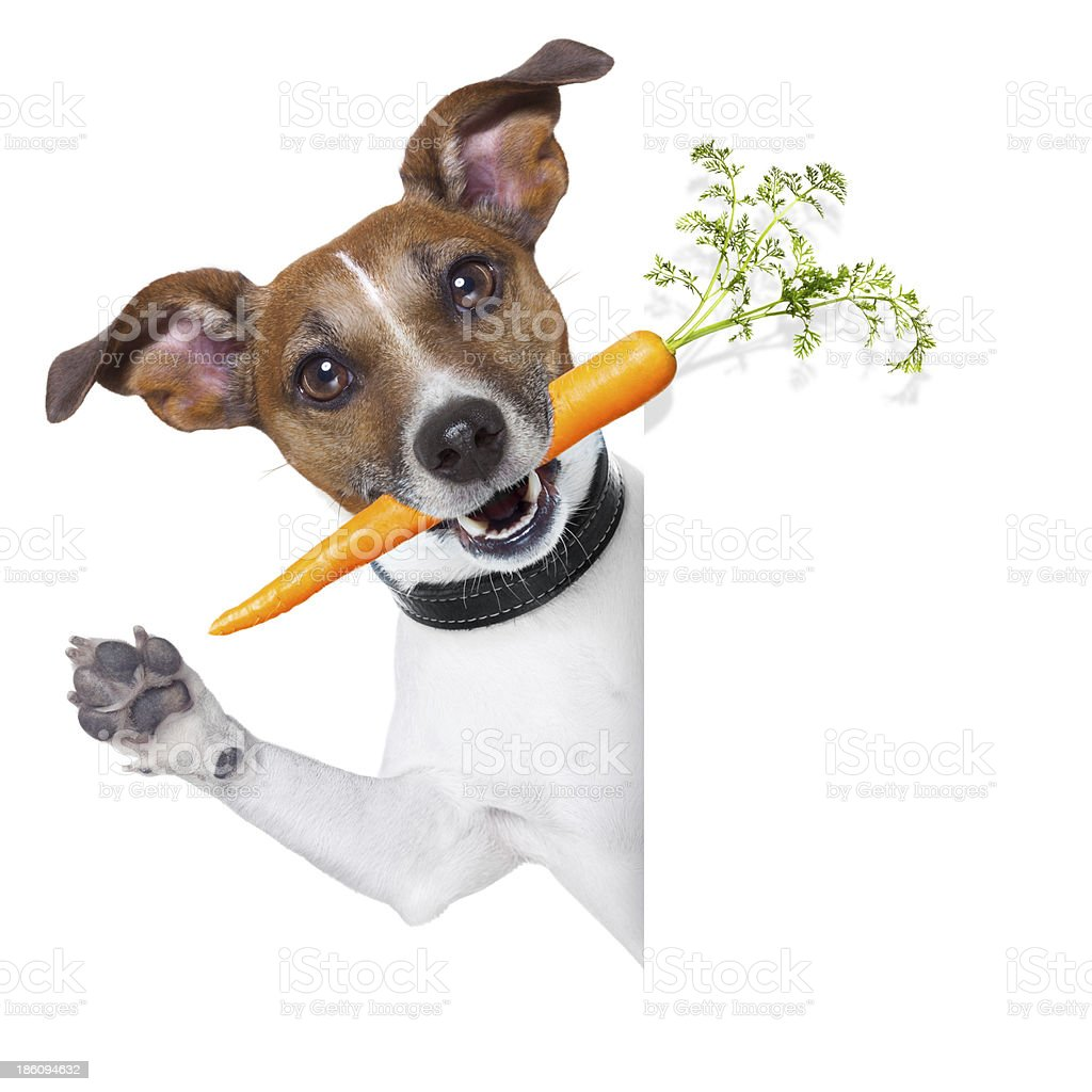 healthy dog with a carrot royalty-free stock photo