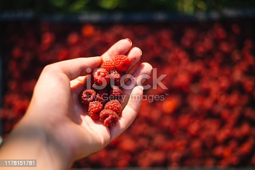 Close-up of a woman holding raspberries in her hand