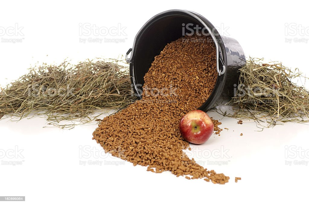 Healthy Equine Diet stock photo