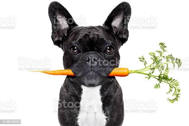 Healthy food dog picture id513043202?b=1&k=6&m=513043202&s=612x612&h=qovi1ni limvzgc6isss6as2vfteoxzlyhacj2nk7rs=