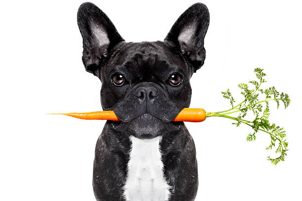 healthy food dog - animal health stock photos and pictures