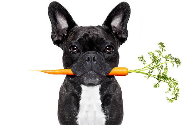 gesunde speisen hund - karotten gesund stock-fotos und bilder