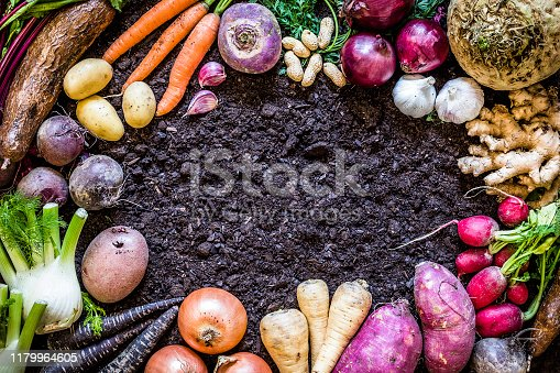 Top view of a large group of multicolored fresh organic roots, legumes and tubers shot on a soil background. The composition includes potatoes, Spanish onions, ginger, purple carrots, yucca, beetroot, garlic, peanuts, red potatoes, sweet potatoes, golden onions, turnips, parsnips, celeriac, fennels and radish. Objects are disposed on a frame shape leaving a useful copy space at the center of the image on the soil. Low key DSLR photo taken with Canon EOS 6D Mark II and Canon EF 24-105 mm f/4L