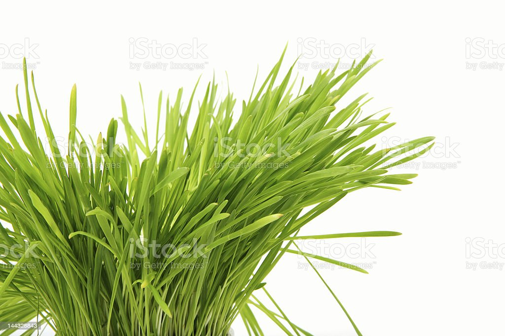 Healthy grass stock photo