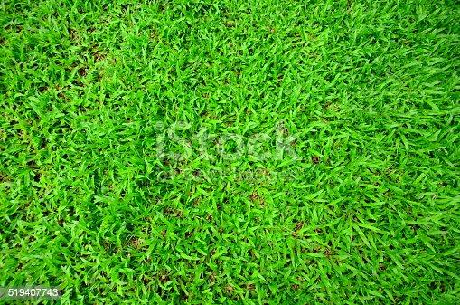 istock Healthy grass 519407743