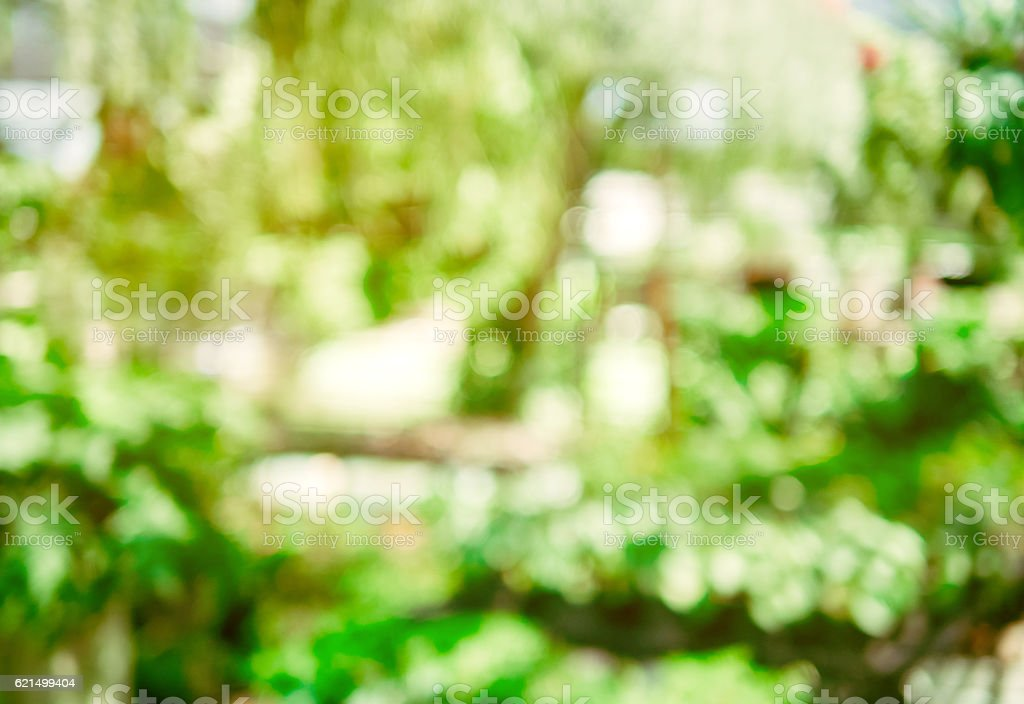 healthy green bio background. abstract blurred foliage and brigh photo libre de droits