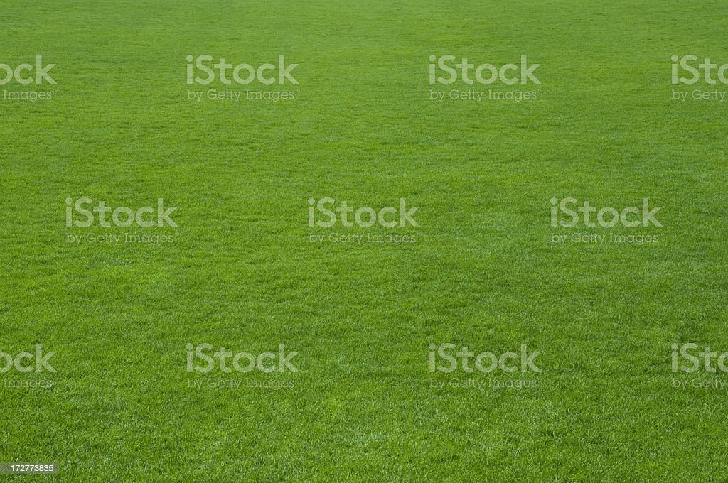 Healthy green lawn grass stock photo